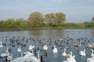 Wetland Wildfowl Trust
